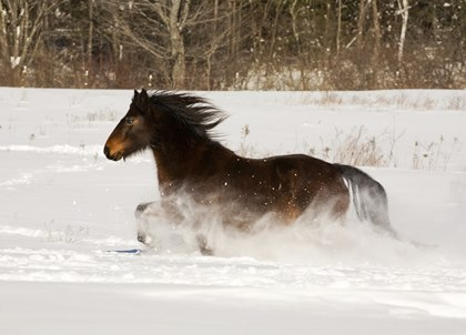 Horse Runner Thru Snow